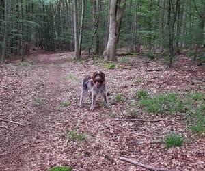best friend, griffon korthals, and dog image