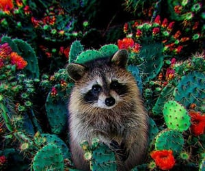 animal, cute, and cactus image