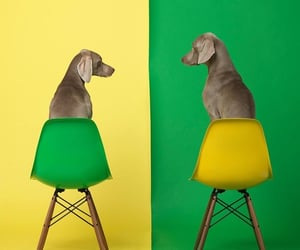 art, dogs, and chairs image