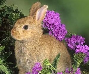 bunnies, bunny, and coelho image