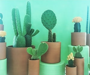 cacti, mint, and cactus image