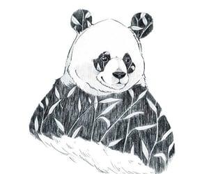 animal, art, and bamboo image