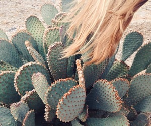 cactus, greens, and nature image