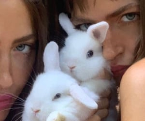 fluffy, rabbit, and cute image
