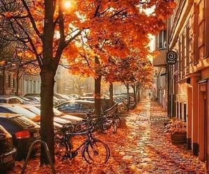 amazing, autumn, and beautiful image
