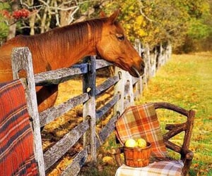 apples, autumn, and blanket image