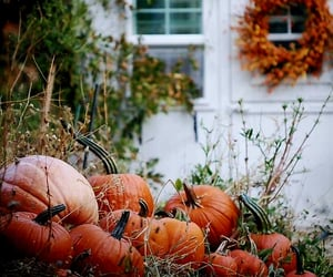 decor and pumpkin image