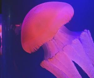 aesthetic, animal, and aquarium image