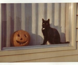cat, pumpkin, and Halloween image