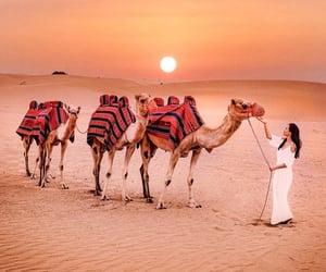 animals, landscape, and camels image