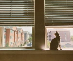 apartment, cats, and city image