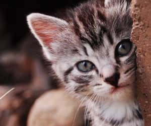 Animales, belleza, and cat image