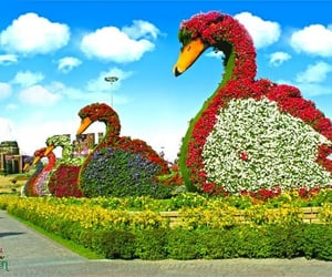 swans and dubai miracle garden image