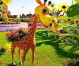giraffes and dubai miracle garden image