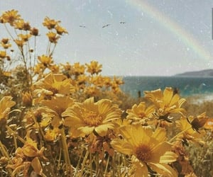 flowers, rainbow, and yellow image