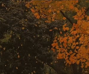 autumn, gif, and nature image