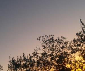 orange, photography, and tree image