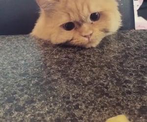 cat, songmino, and cutie image
