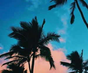 blue, palm trees, and beach image
