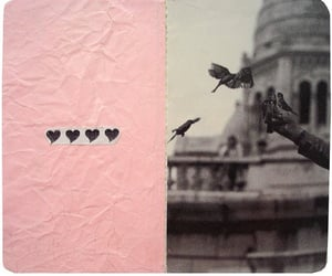 aesthetic, birds, and image image