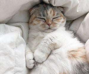 animals, cosy, and good morning image