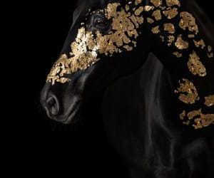 horse, black, and gold image