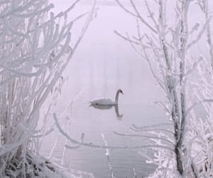 filter, soft, and Swan image