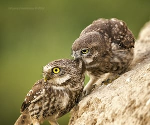 Animales, aves, and owls image