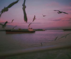 birds, dark, and pink image