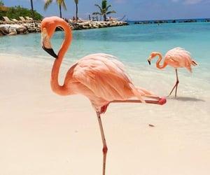 animals, beach, and flamingo image