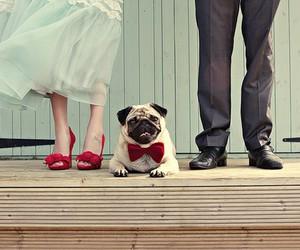 dog wedding image