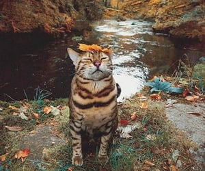 autumn, cats, and colors image