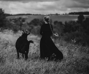 black and white, goat, and photography image