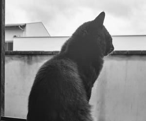cat, gato, and die katze image