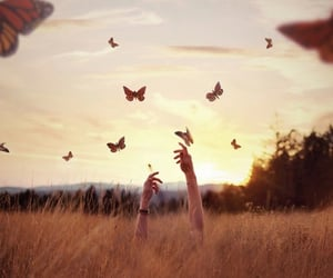 butterfly, sunset, and wonder image