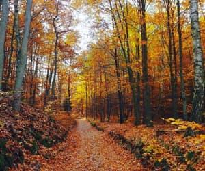 autumn, autumnal, and foliage image