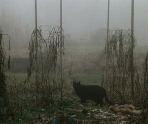 autumn, cat, and dark image