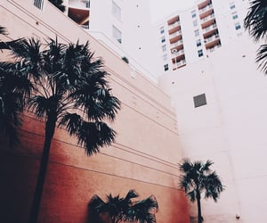 buildings, city, and palm trees image