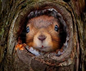 animals, squirrel, and wood image