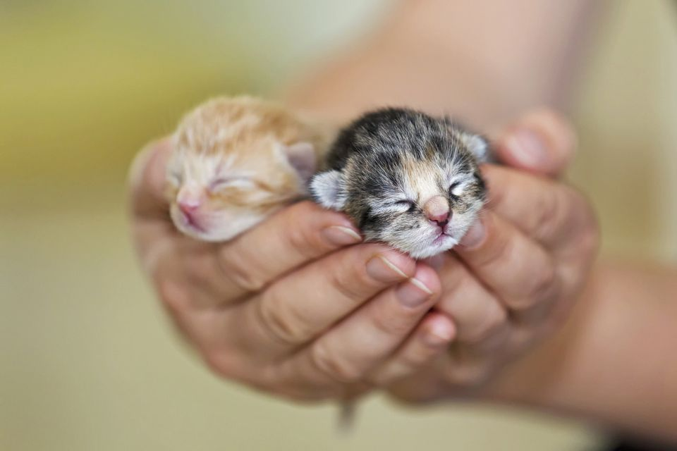cats, cute animals, and baby animals image