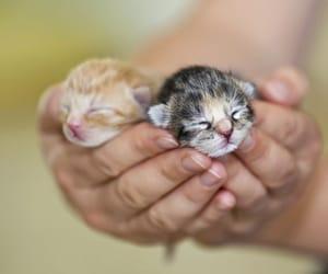 Image result for newborn kitten