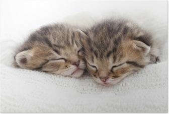baby animals, cute animals, and kitten image