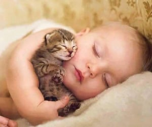 baby, cat, and kitten image
