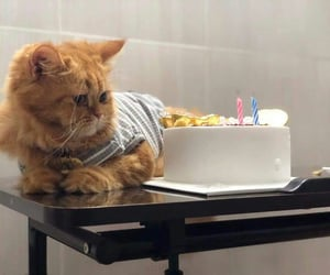 birthday, cute, and cat image