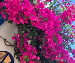 blue, flowers, and Greece image