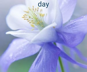 blue, good morning, and flower image