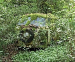 green, tree, and bus image