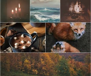 aesthetic, art, and foxes image