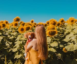 autumn, cute dogs, and fall image