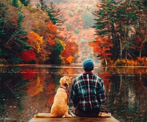 dog, autumn, and nature image